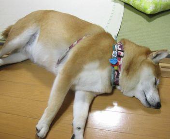 疲れたです・・・