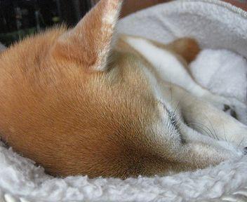 冬用の寝床