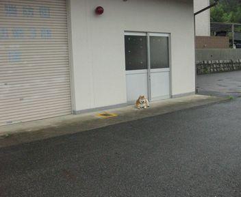 こっこで待ってる・・・