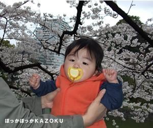 080330-hanami1.jpg