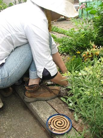夏の庭仕事