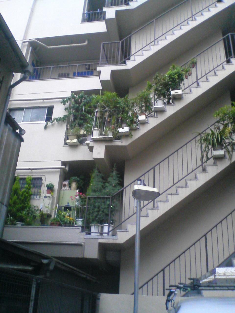 高円寺の園芸5月
