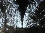 冬ソナ通り2