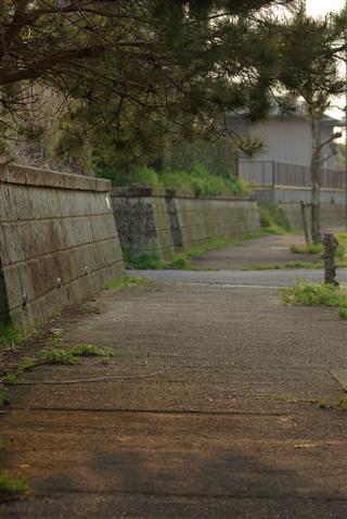 道の風景②
