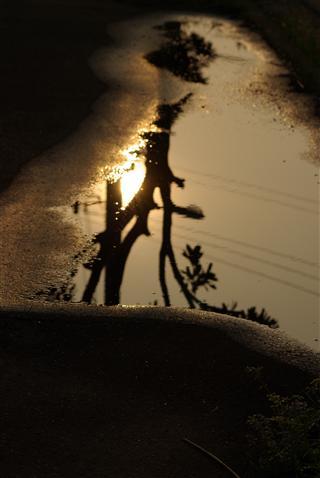 水たまりの夕暮れ