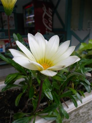 観音駅の花