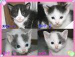 center-kitten10s.jpg