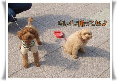 20090330blog4.jpg