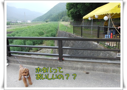 20090614blog4.jpg