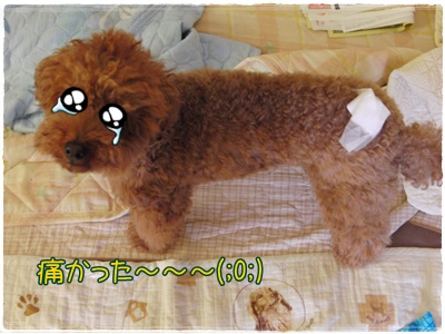 20090706blog3.jpg