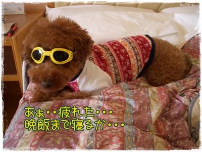 20090828blog23.jpg