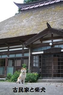 古民家と柴犬