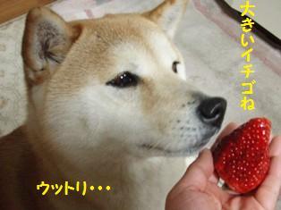 イチゴにウットリ