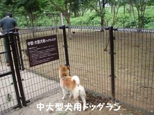 中大型犬用