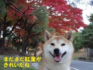 紅葉がきれいだね