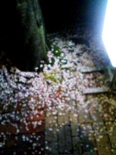 路面のさくら花びら 090414_2052~001
