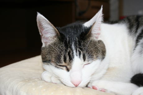 IMG_0142きじ寝る