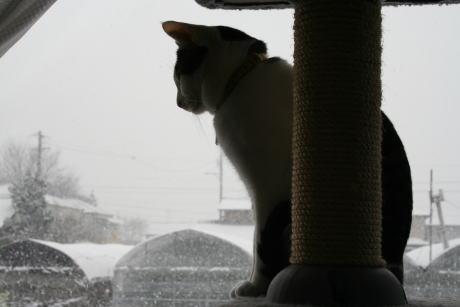 IMG_0287雪見きじ
