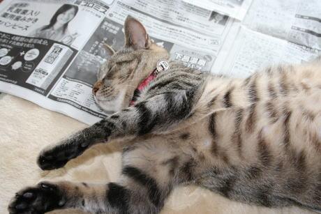 IMG_0801トラコ 新聞寝る