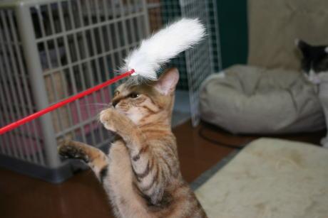 IMG_1081コムギ 猫じゃらし