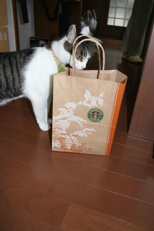 IMG_1298きじ コーヒー