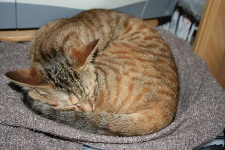 IMG_1490コムギ 寝てる