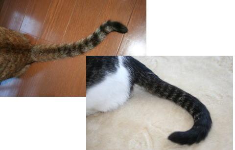 きじとコムギの尻尾