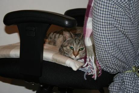 IMG_1560トラコ 椅子の上