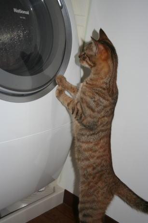 IMG_1764コムギ 洗濯機3