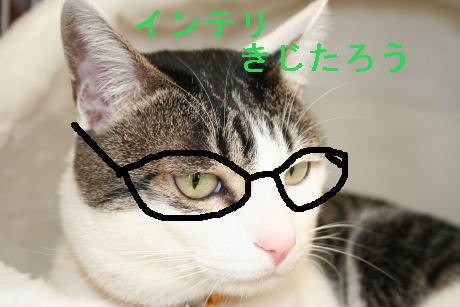 IMG_0059きじ インテリ