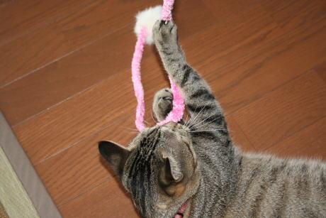 IMG_3192トラコ 猫じゃらし