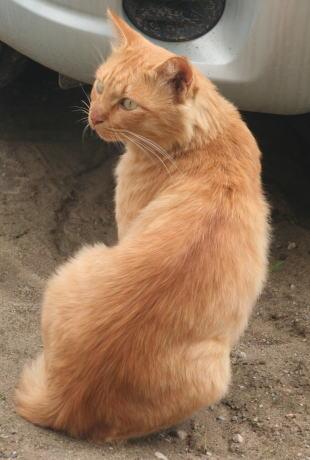 IMG_3689茶色猫