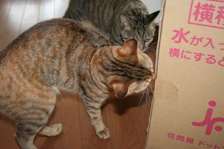 IMG_3847コムギ 花