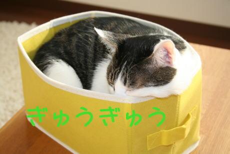 IMG_4403きじ1