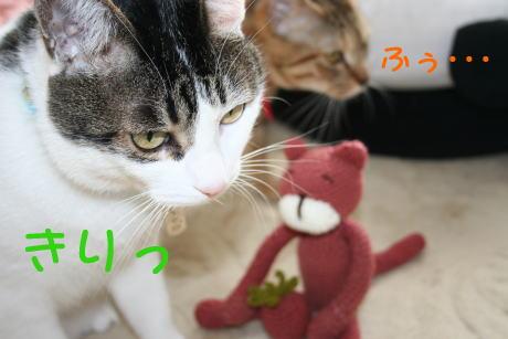 IMG_4636きじ2