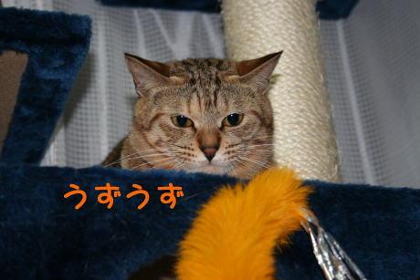 IMG_4707コムギ2