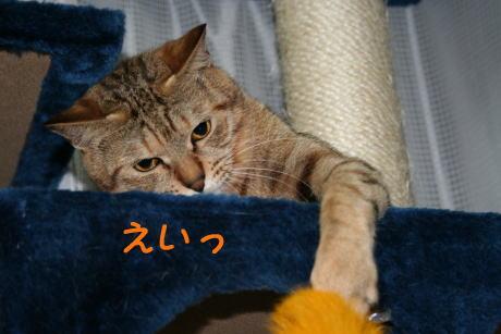 IMG_4708コムギ3