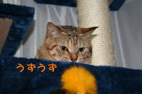 IMG_4711コムギ4