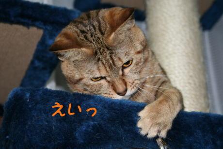 IMG_4712コムギ5
