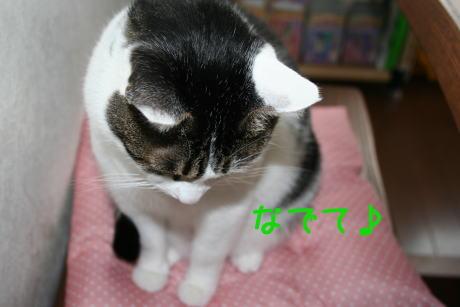IMG_4761きじ1