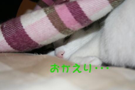 IMG_4955きじ2