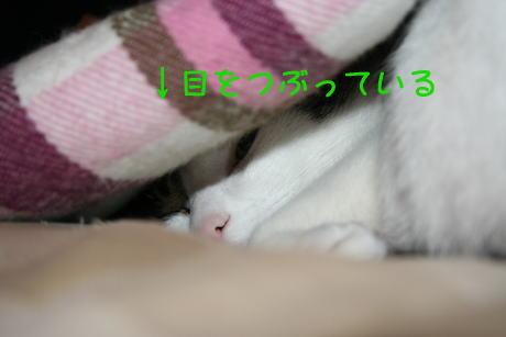 IMG_4956きじ3