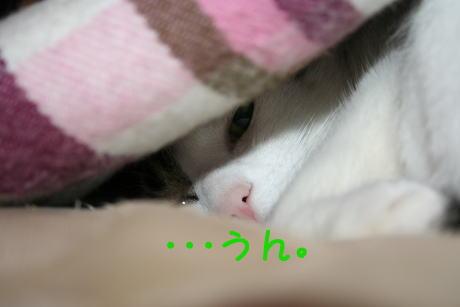 IMG_4957きじ4