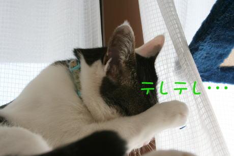 IMG_4947きじ2