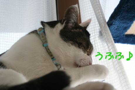 IMG_4948きじ3