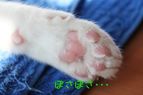 IMG_5119きじ4