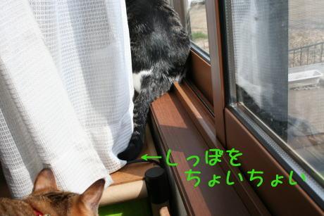 IMG_5140きじとコムギ1