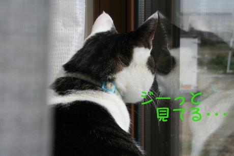 IMG_5143きじ2
