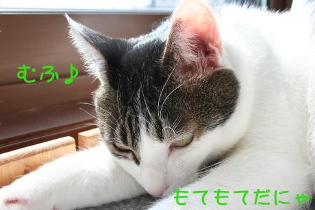 IMG_5197きじ4