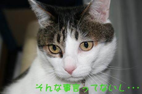 IMG_5230きじ4